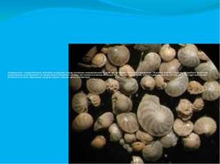Микрофоссилии- микроскопические включения восадочные породыископаемых микр