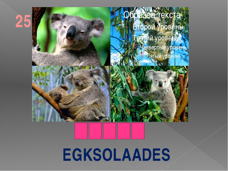 EGKSOLAADES 25