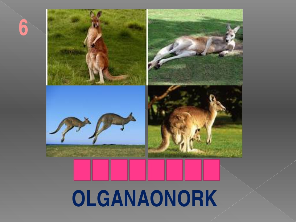 OLGANAONORK 6