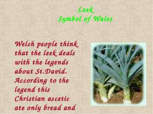 Leek Symbol of Wales Welsh people think that the leek deals with the legends