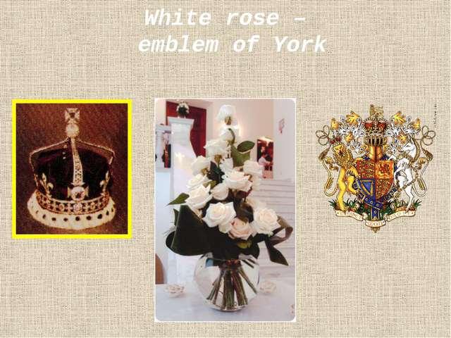 White rose – emblem of York