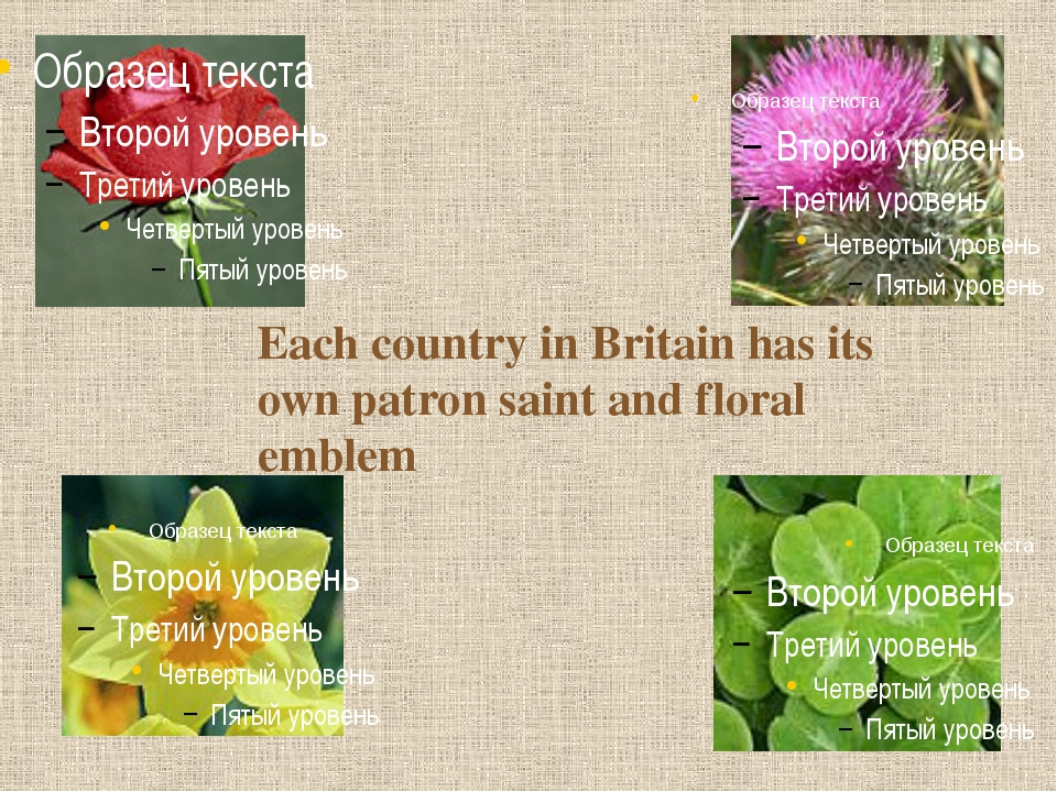 Each country in Britain has its own patron saint and floral emblem