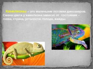 Хамелеоны – это маленькие потомки динозавров. Смена цвета у хамелеона зависи