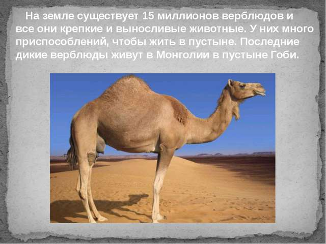 На земле существует 15 миллионов верблюдов и все они крепкие и выносливые жи...