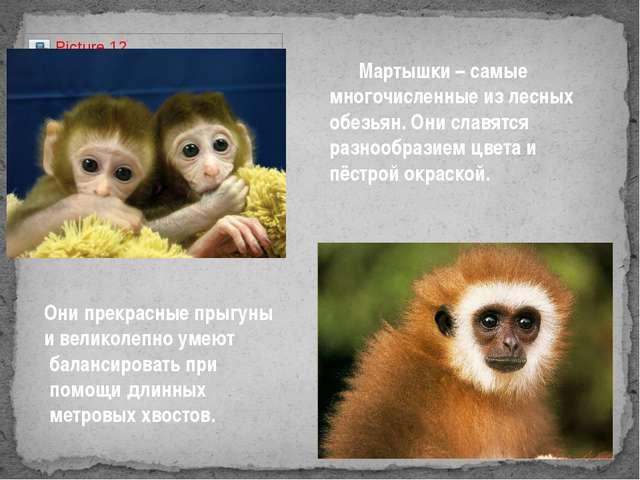 Мартышки – самые многочисленные из лесных обезьян. Они славятся разнообразие...