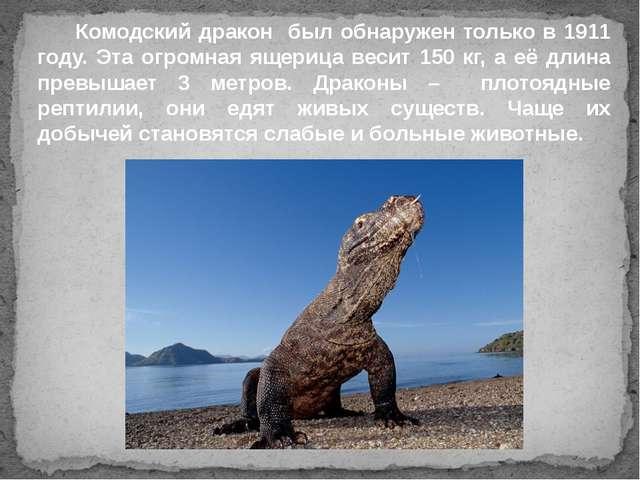 Комодский дракон был обнаружен только в 1911 году. Эта огромная ящерица веси...