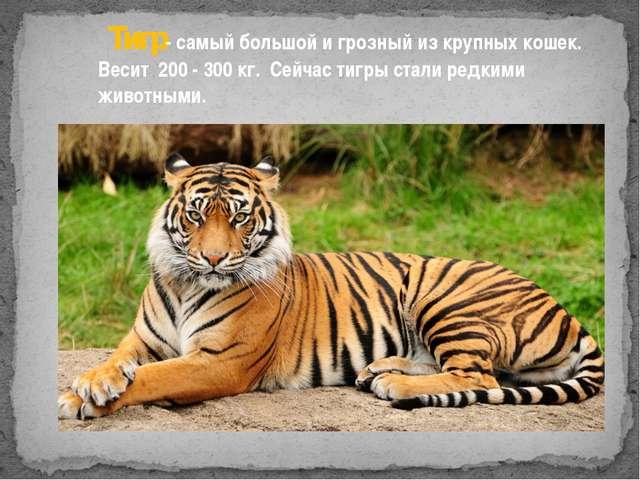 Тигр- самый большой и грозный из крупных кошек. Весит 200 - 300 кг. Сейчас т...
