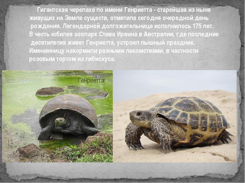 Гигантская черепаха по имени Генриетта - старейшая из ныне живущих на Земле...