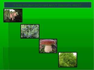 Какие лесные растения могут заменить мясо?