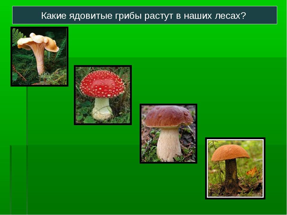 Какие ядовитые грибы растут в наших лесах?