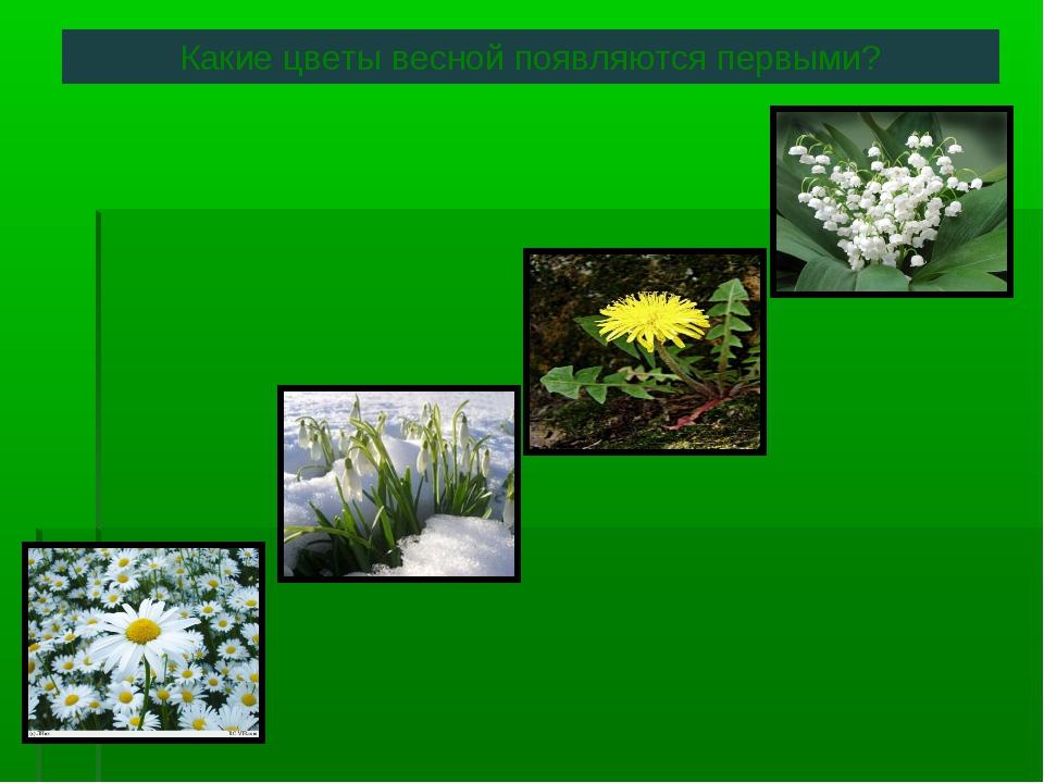 Какие цветы весной появляются первыми?