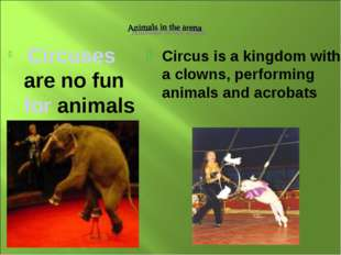 Circuses are no fun for animals Circus is a kingdom with a clowns, performin