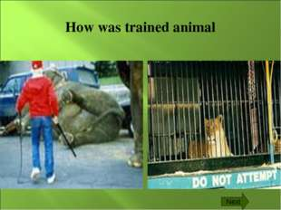 How was trained animal Next