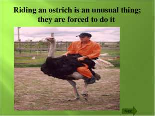 Riding an ostrich is an unusual thing; they are forced to do it Next