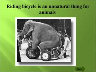 Riding bicycle is an unnatural thing for animals Next