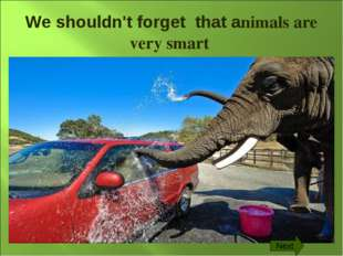 We shouldn't forget that animals are very smart Next