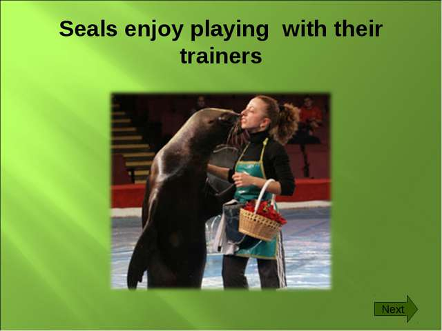 Seals enjoy playing with their trainers Next