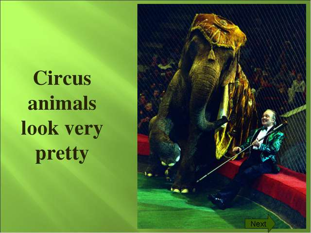 Circus animals look very pretty Next