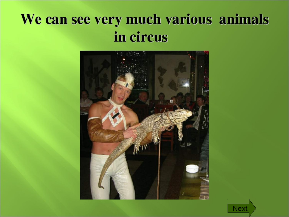 We can see very much various animals in circus Next