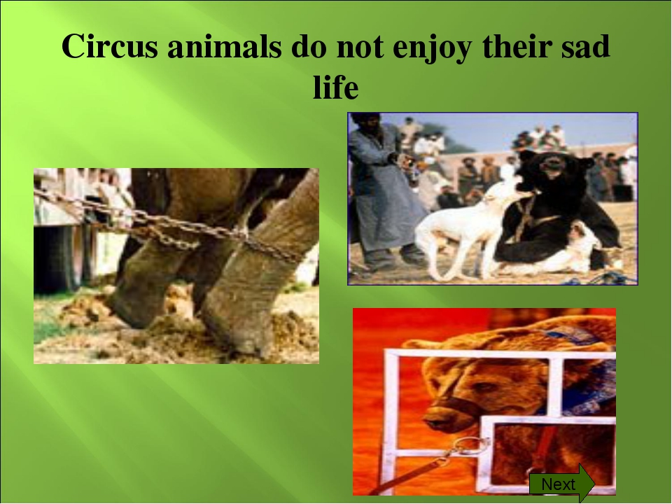 Circus animals do not enjoy their sad life Next