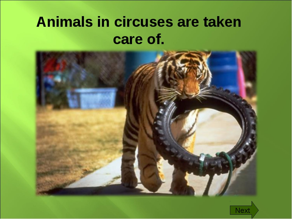 Animals in circuses are taken care of. Next