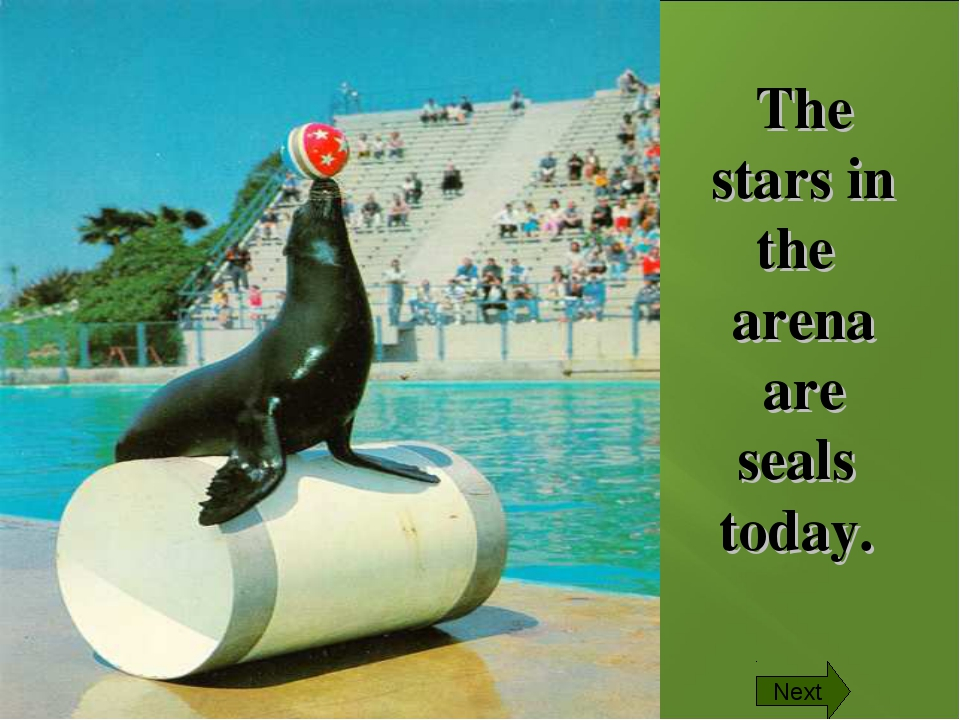 The stars in the arena are seals today. Next