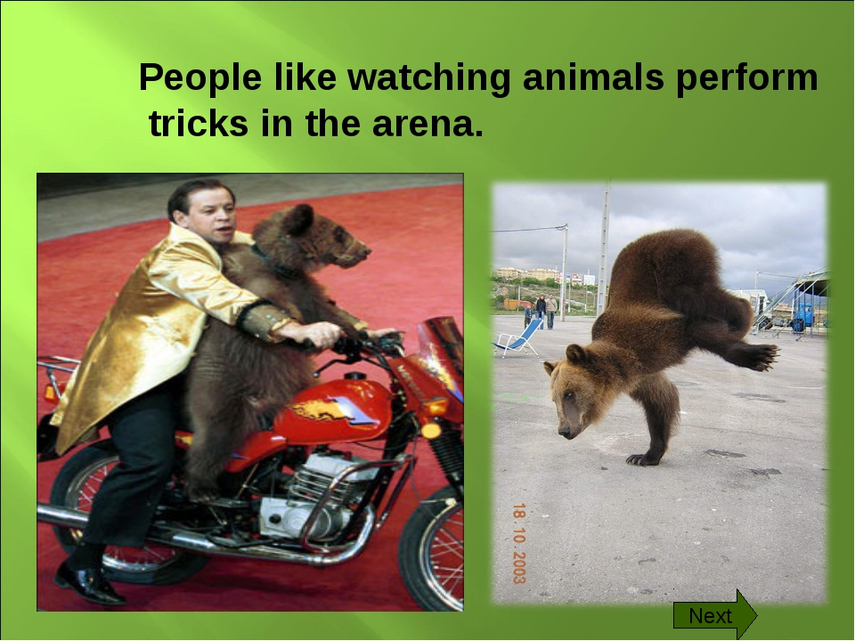 People like watching animals perform tricks in the arena. Next