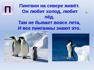 Пингвин на севере живёт. Он любит холод, любит лёд. Там не бывает вовсе лета,