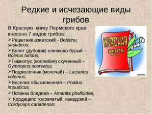 Редкие и исчезающие виды грибов В Красную книгу Пермского края внесено 7 видо