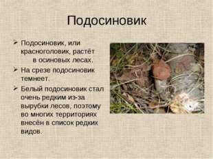 Подосиновик Подосиновик, или красноголовик, растёт в осиновых лесах. На срезе