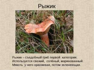 Рыжик Рыжик – съедобный гриб первой категории. Используется свежий, солёный,