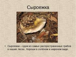 Сыроежка Сыроежки – одни из самых распространенных грибов в наших лесах. Хоро