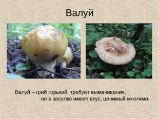 Валуй Валуй – гриб горький, требует вымачивания, но в засолке имеет вкус, цен