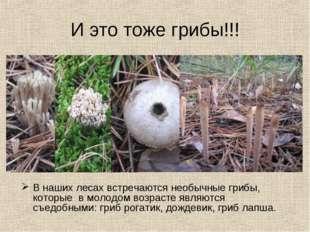 И это тоже грибы!!! В наших лесах встречаются необычные грибы, которые в моло