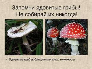 Запомни ядовитые грибы! Не собирай их никогда! Ядовитые грибы: бледная поганк