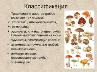 Классификация Традиционно царство грибов включает три отдела: слизевики, или