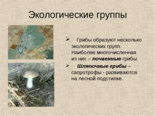 Экологические группы Грибы образуют несколько экологических групп. Наиболее м