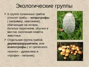 К группе почвенных грибов относят грибы – копротрофы ( например, навозники),