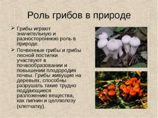 Роль грибов в природе Грибы играют значительную и разностороннюю роль в приро
