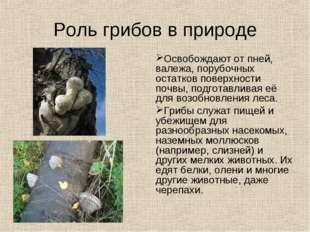 Роль грибов в природе Освобождают от пней, валежа, порубочных остатков поверх