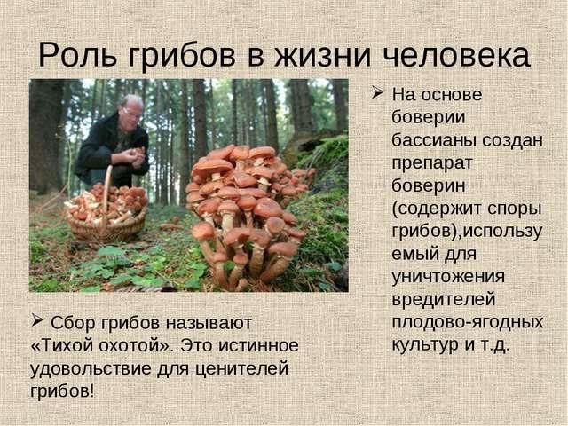 Роль грибов в жизни человека На основе боверии бассианы создан препарат бовер...