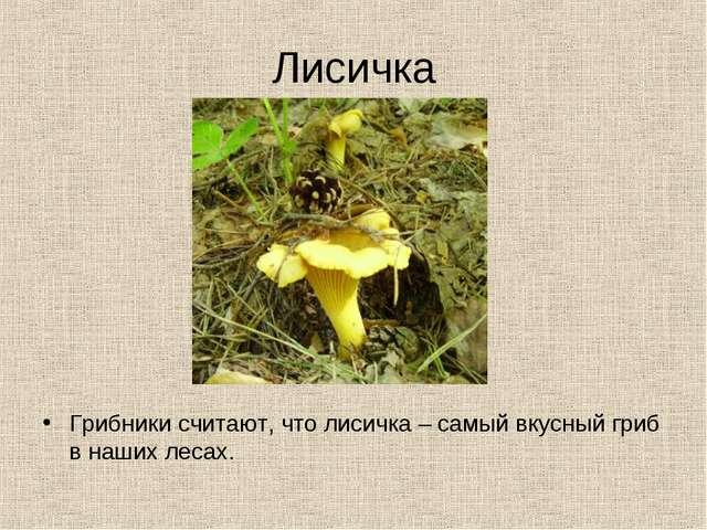 Лисичка Грибники считают, что лисичка – самый вкусный гриб в наших лесах.