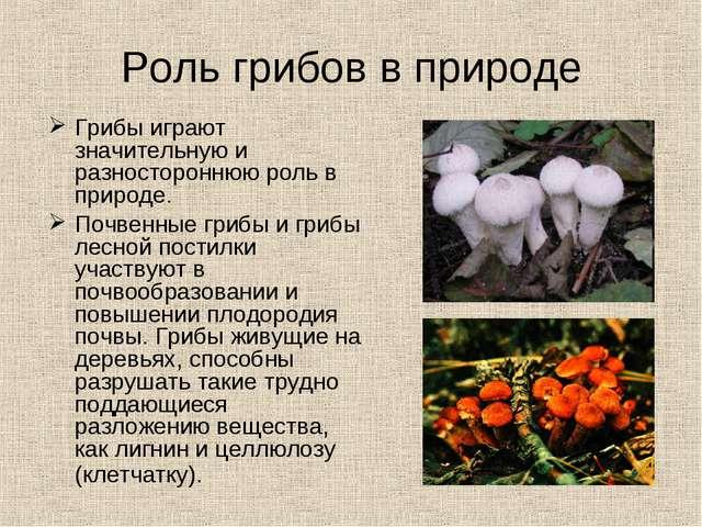 Роль грибов в природе Грибы играют значительную и разностороннюю роль в приро...