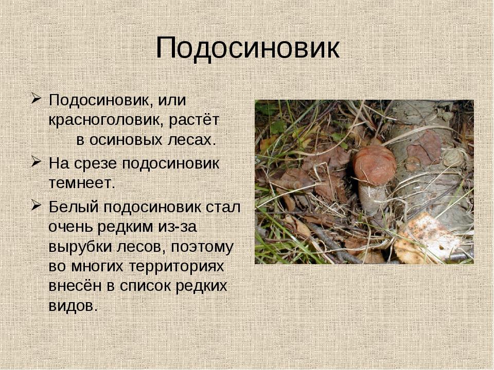 Подосиновик Подосиновик, или красноголовик, растёт в осиновых лесах. На срезе...