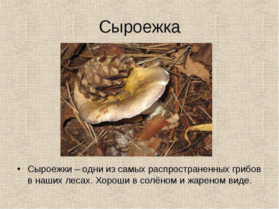Сыроежка Сыроежки – одни из самых распространенных грибов в наших лесах. Хоро...