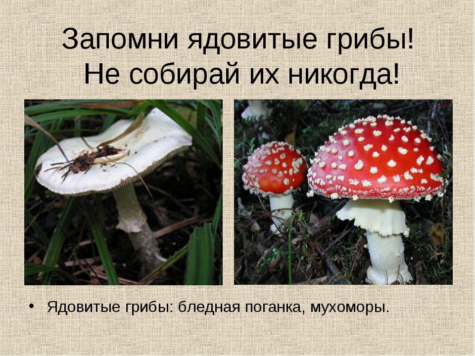 Запомни ядовитые грибы! Не собирай их никогда! Ядовитые грибы: бледная поганк...