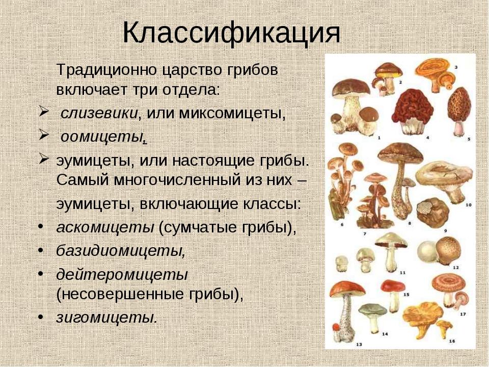 Классификация Традиционно царство грибов включает три отдела: слизевики, или...