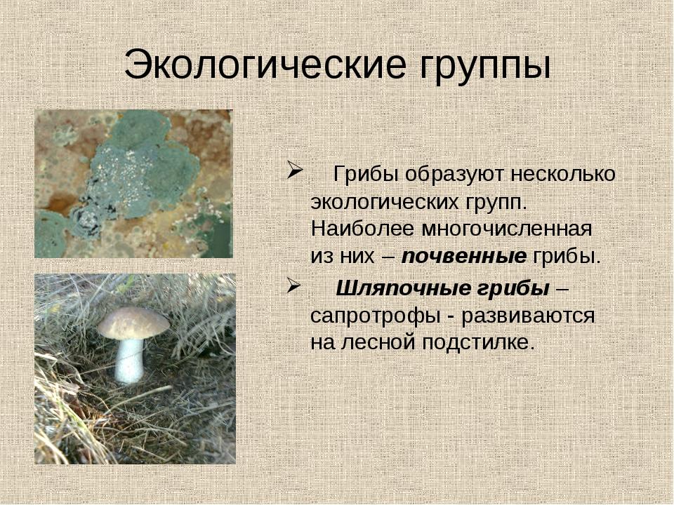 Экологические группы Грибы образуют несколько экологических групп. Наиболее м...