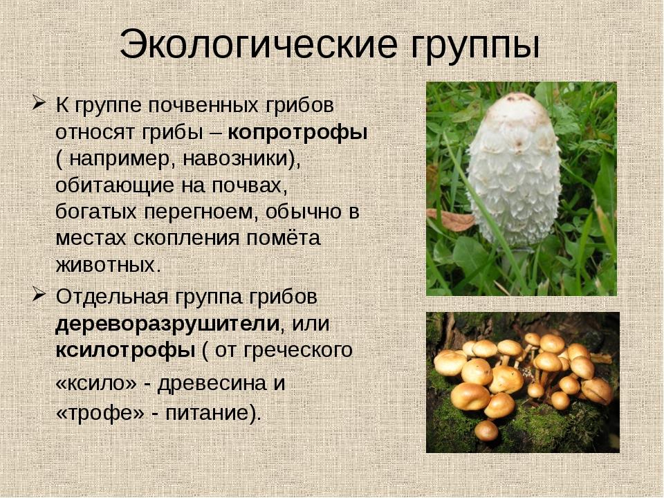 К группе почвенных грибов относят грибы – копротрофы ( например, навозники),...