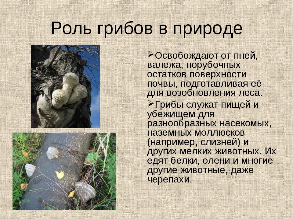 Роль грибов в природе Освобождают от пней, валежа, порубочных остатков поверх...